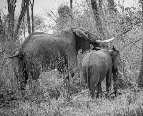 Elefantes_Mundicaza