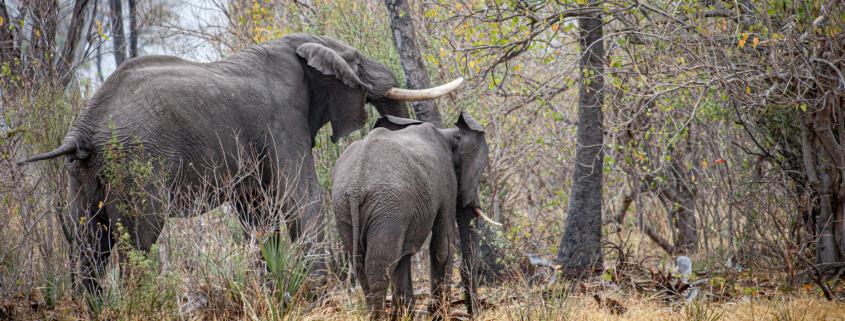 Safaris en África, vive una auténtica experiencia con animales salvajes